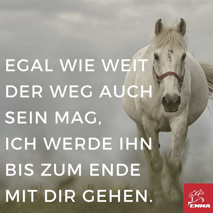 Pferdesprüche & Pferdefutter-emma-pferdefuttershop.de(5)