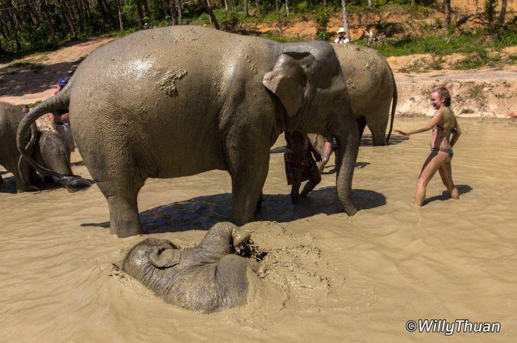 Phuket Elephant Trekking - Phuket 101