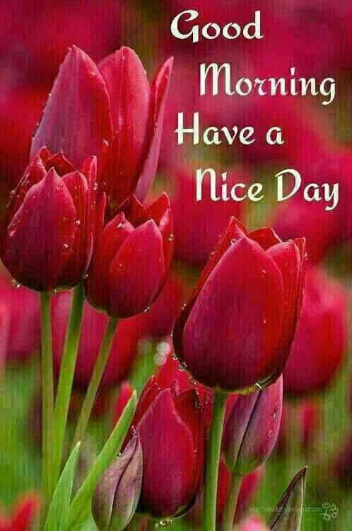 Good Morning Beautiful Red Flowers : Best images about good morning on pinterest reasons to smile mondays and