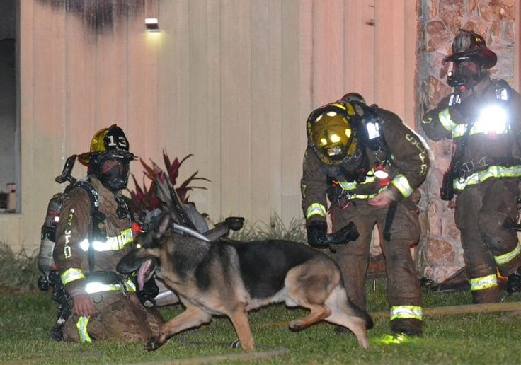 German Shepherd Leads Firefighters to Children in Burning Home - American Kennel Club