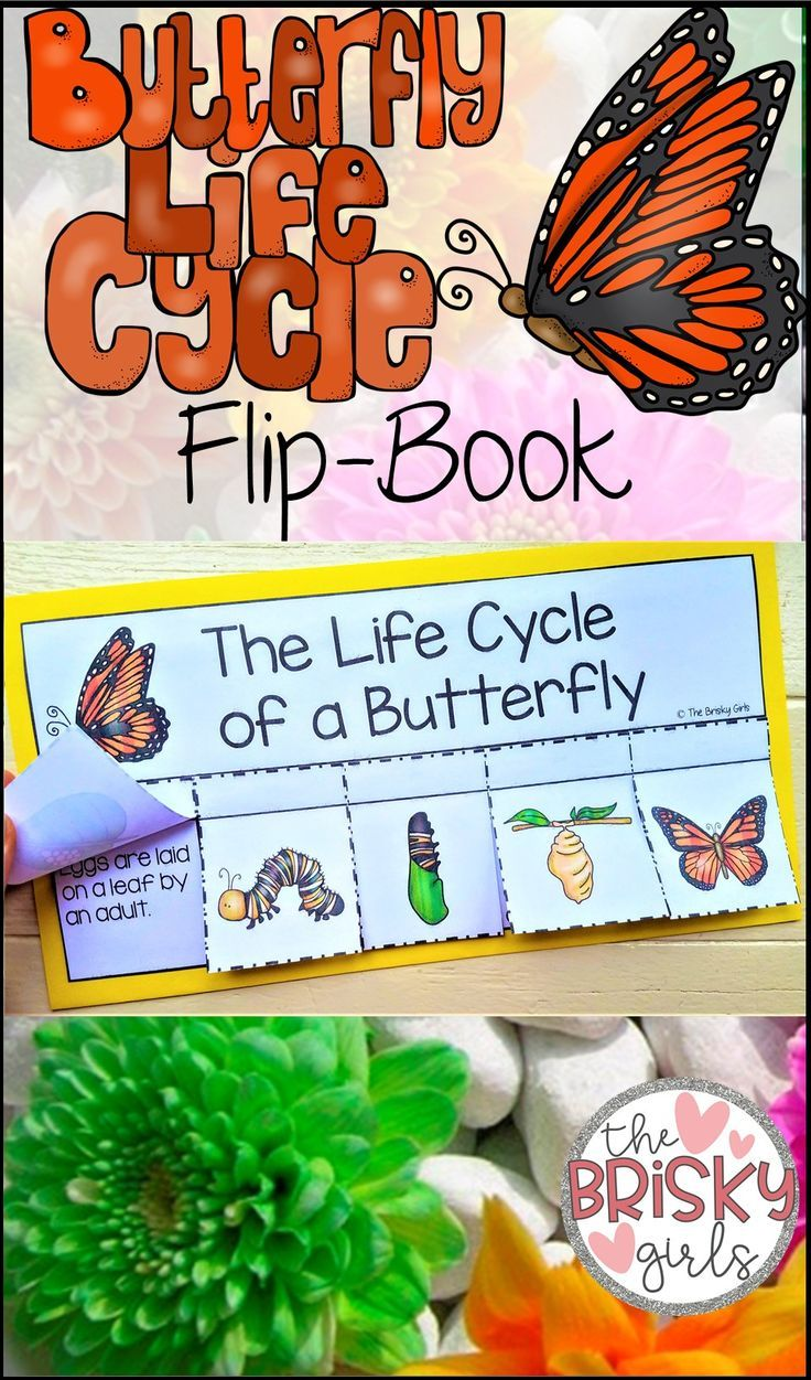 Predownload: Butterfly Life Cycle Life Cycle Of A Butterfly Life Cycle Craft Butterflies Life Cycle Craft Butterfly Life Cycle Butterfly Life Cycle Craft [ 1251 x 736 Pixel ]