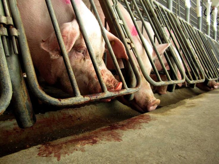 Animal Agriculture Industry Holds Conference Aiming to Help Fight Animal Rights Extremists
