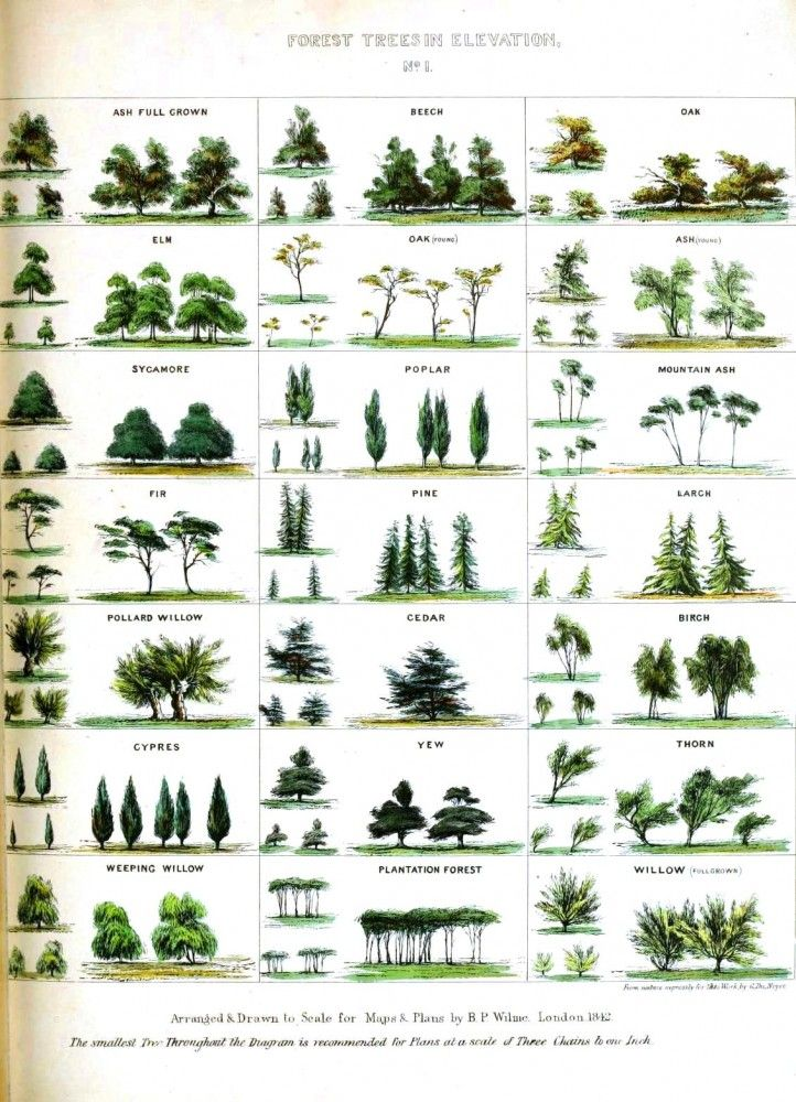 Vintage Tree Identification Chart.