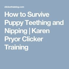 How to Survive Puppy Teething and Nipping | Karen Pryor Clicker Training http://www.poochportal.com/how-to-train-your-dog-not-to-jump-up-on-people/