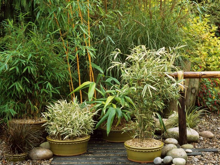 Garden Design Using Bamboo 153 best plant ideas- bamboo images on pinterest | landscaping