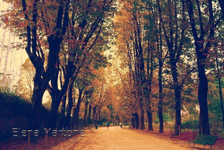 Viale d'autunno