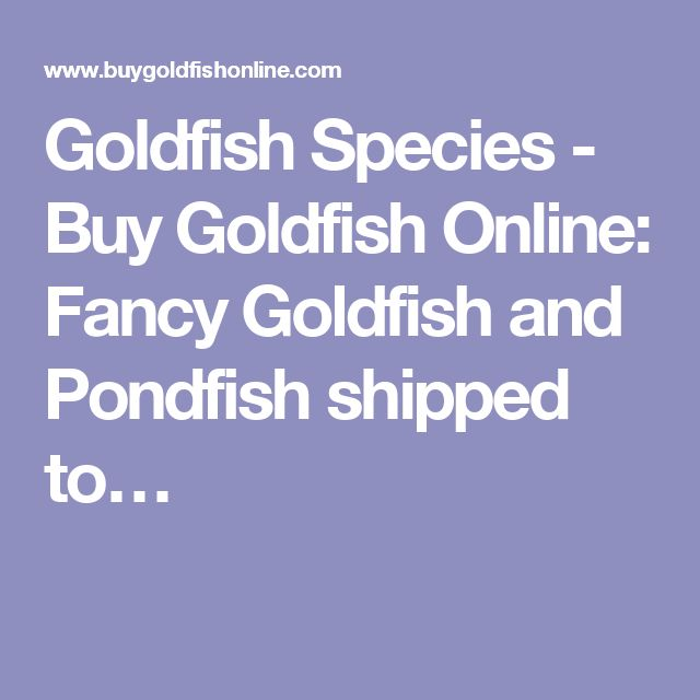 Goldfish Species - Buy Goldfish Online: Fancy Goldfish and Pondfish shipped to…