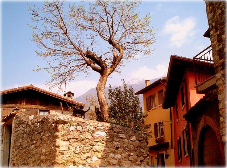 Lago di Garda - Malcesine
