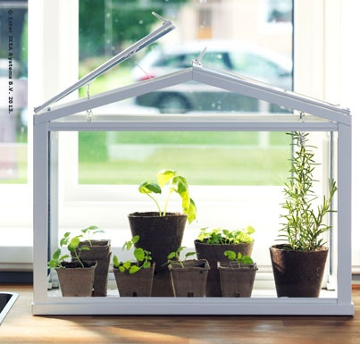 SOCKER greenhouse is especially  good for growing seedlings.