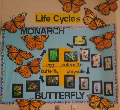 This would be a really neat bulletin board for science when explaining about the butterfly cycle.