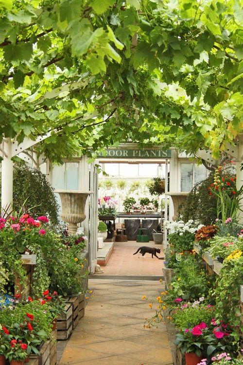 nurseryGreen Houses, Gardens Greenhouses, Potting Sheds, Greenhouses Aluminium, House Gardens, Pots Sheds, Greenhouses Sheds Porches, Greenhouses Conservatory, Clifton Nurseries