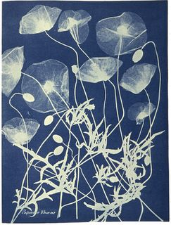 A cyanotype - a sun print or  blueprint, circa 1850, by British botanist Anna Atkins, 1797-1871