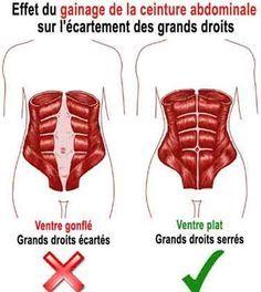 le gainage de la ceinture abdominale reserre les grands droits de l'abdomen