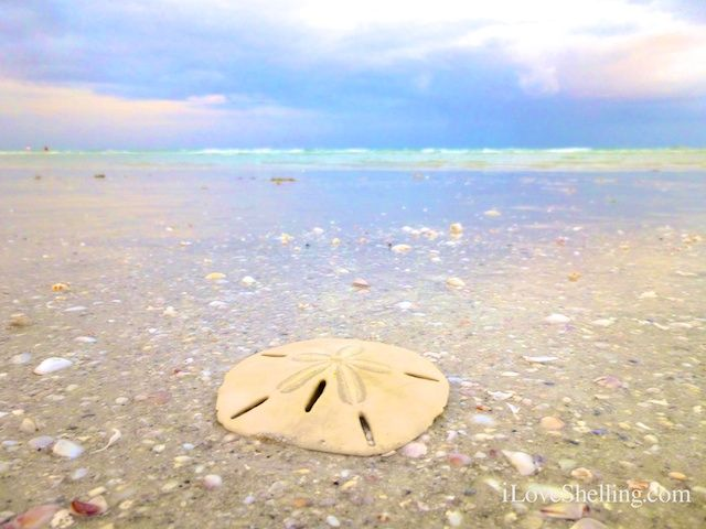 sand dollar on the beach | ... to magnify the brilliant colors of the water, beach, sand and shells