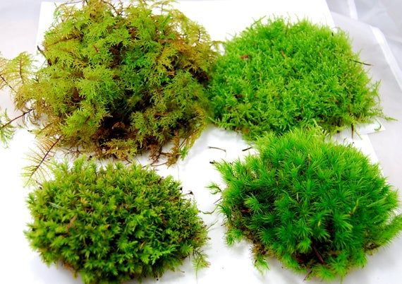 Here You Get A Diversity Of Live Moss That Will Give The