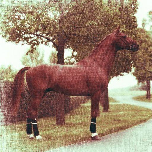 Stallion Barristor