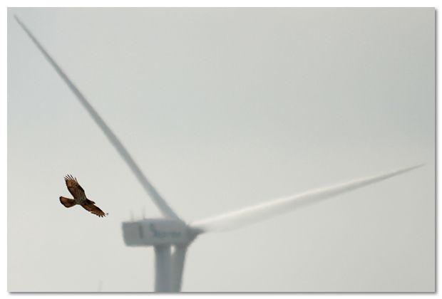 Vogeltrekroute Maatheide wordt beschermd