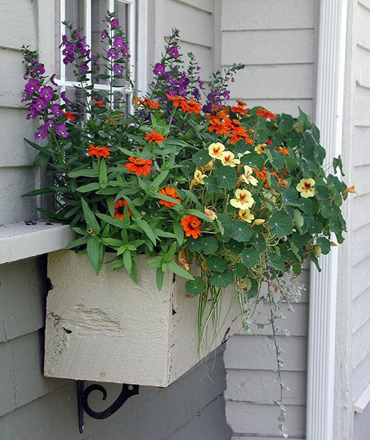 Window Box inspiration from Nantucket