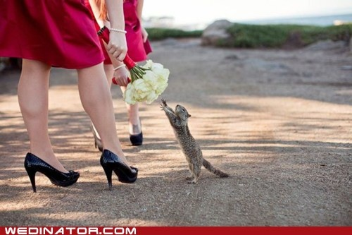 how cute!: Animal Pics, Animal Pictures, Flowers Bouquets, Bridesmaid Flowers, Take Pictures, Funny Pictures, Cute Squirrels, Little Animal, Animal Funny