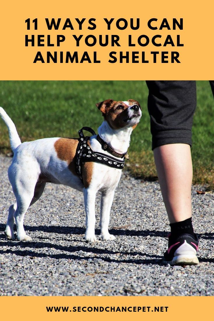 Helping Out At The Shelter What Shelters Need From Volunteers With Images Animal Shelter Animal Shelter Volunteer Animal Rescue Ideas