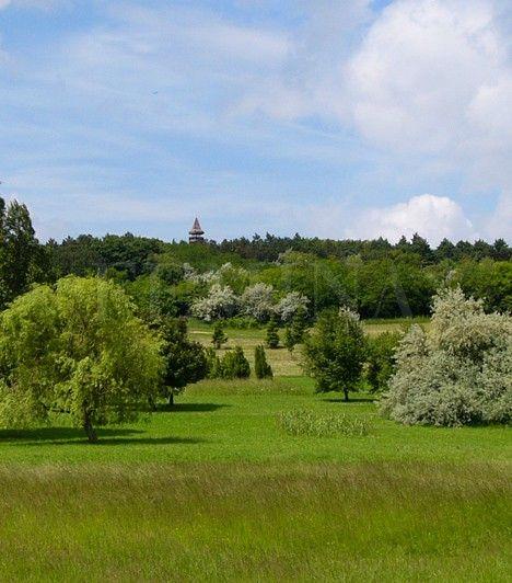 Pákozd-Sukorói Arborétum