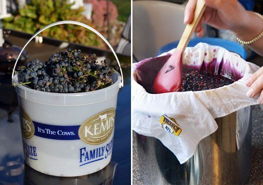 Links to Concord Grape Recipes