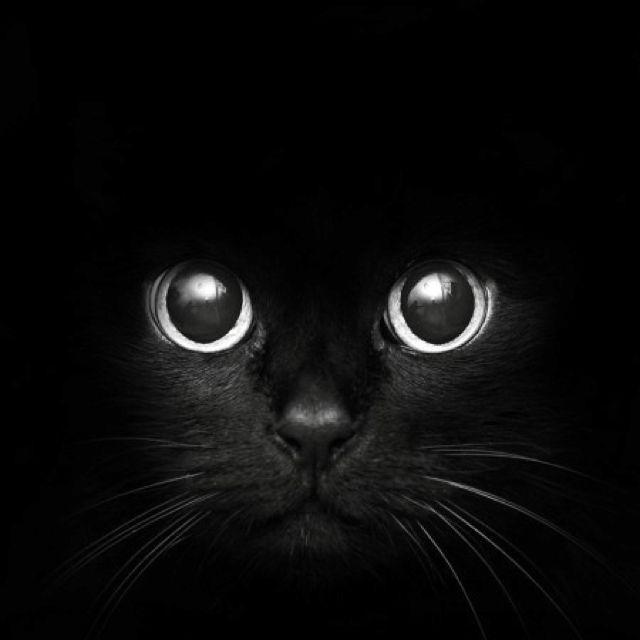 Black cat- nice pic!