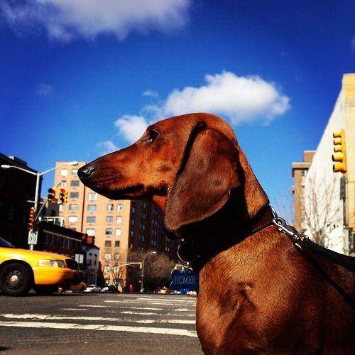 fullnessofallthings:Homer on the Bowery