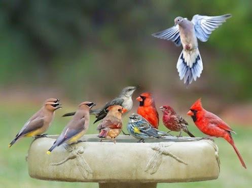 Hey Guys! Move Over!Birds Pictures, Birds Feeders, Birds Of Paradis, Birds Bath, Pools Parties, Crazy Hors, Birds Parties, Dreams Gardens, Bath Time