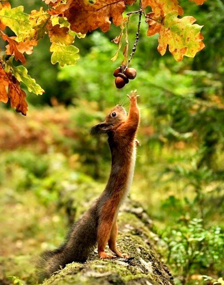 Осень в жизни животных картинки
