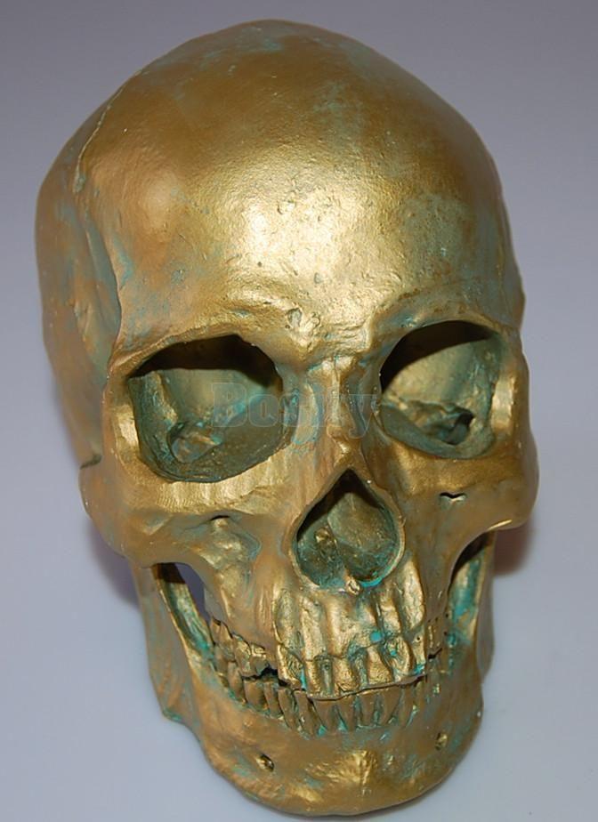 1:1 Human Skull Model Anatomical Medical Teaching Skeleton Antique Bronze