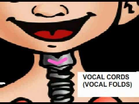 How voice works animated clip. Great for kids! Repinned by  SOS Inc. Resources  http://pinterest.com/sostherapy.