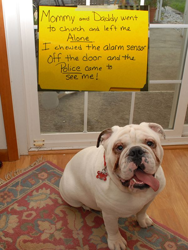 The Best Dog Shaming Pictures Of All Time Dog Shaming