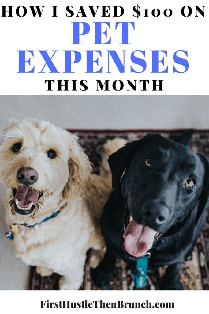 How I Saved Money On Pet Expenses This Month Dog Smells Living
