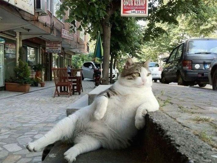 Como todo bom gato, Tombili ganhou fama na internet depois de aparecer em uma pose incomum. Tirando um minuto do seu dia para relaxar em uma escada em Istambul, ele que já era conhecido no bairro, chegou ao estrelado da web. Tombili infelizmente morreu em agosto, mas ficou eternizado na escada que resolveu relaxar. A …