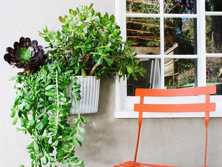 How To Build A Living Wall the 25+ best living wall planter ideas on pinterest | vertical