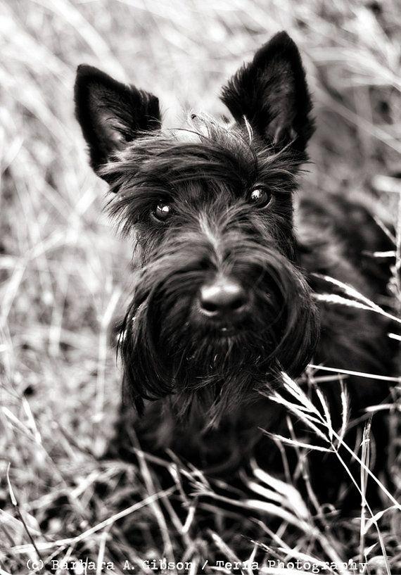 que lindo perro negro!