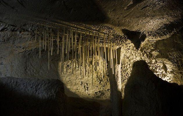 Biospeologia este un domeniu interdisciplinar, aflat la confluența dintre biologie și speologie și care are drept obiect studiul organismelor care trăiesc în peșteri.Fondatorul biospeologiei a fost Emil Racoviță.