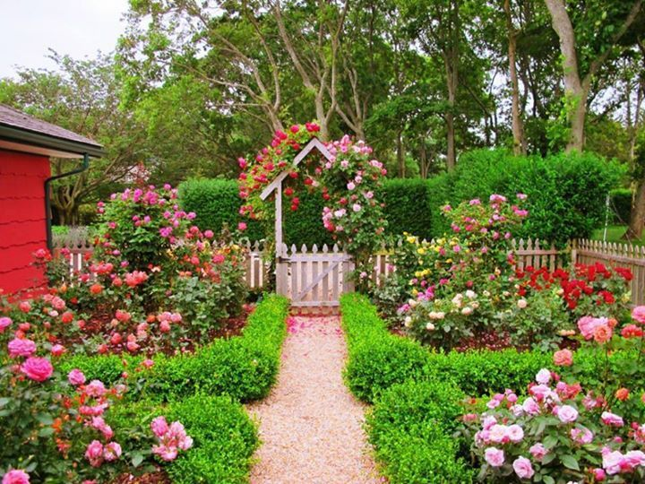 The Entrance To Podges Hamptons Cottage Is A Riotous Mass Of Roses Chosen Podge Says More For Their Scent Than Color