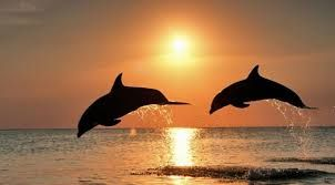 Image result for dolphins jumping in the air