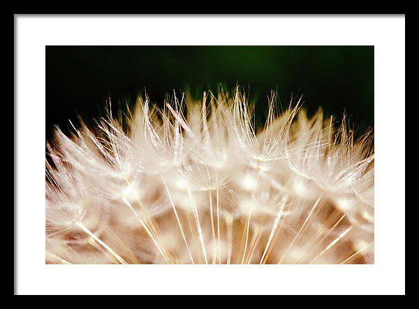 Perfection Of Dandelion By Svetlana Yelkovan Framed Print featuring the photograph Perfection Of Dandelion by Svetlana Yelkovan  #SvetlanaYelkovanFineArtPhotography  #ArtForHome #FineArtPrints #Dandelion #Macro #Flower