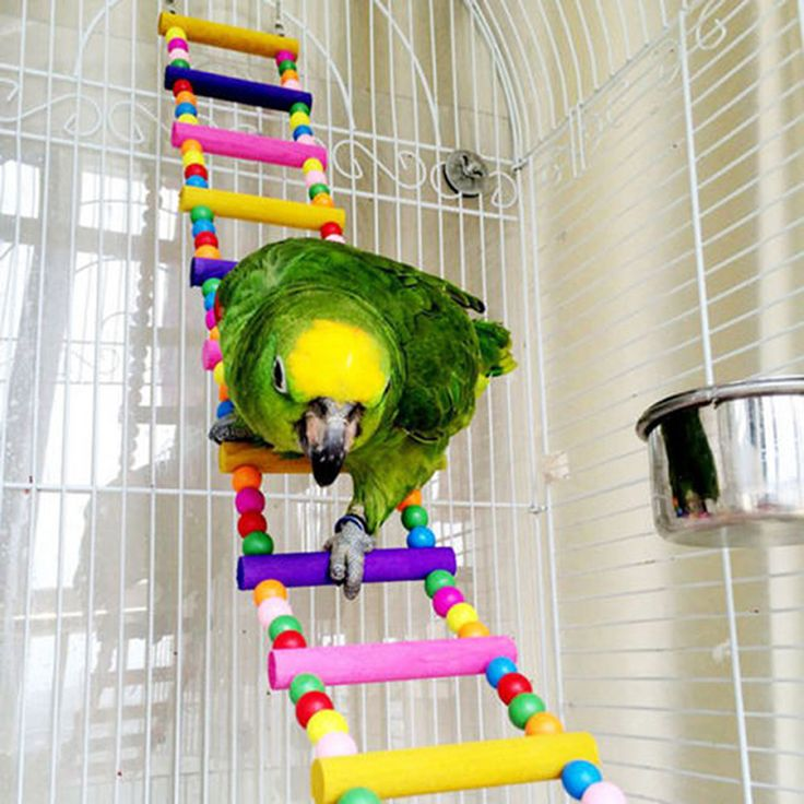 Pet Bird Toys Wood Ladder Climb Parrot Macaw Cage Swing Shelf Parrot Bites Play brinquedo FEN# // FREE Shipping //     Get it here ---> https://thepetscastle.com/pet-bird-toys-wood-ladder-climb-parrot-macaw-cage-swing-shelf-parrot-bites-play-brinquedo-fen/    #hound #sleeping #puppies