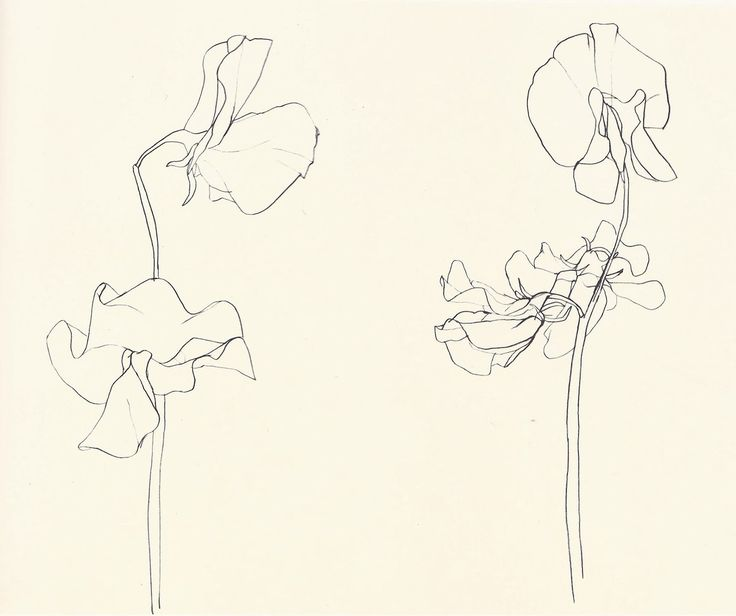 """Ellsworth Kelly, Plant Drawings From The Financial Times: """"Rendered primarily in pencil or ink, but occasionally awash in watercolour, the botanicals take drawing to its most simplified form while..."""