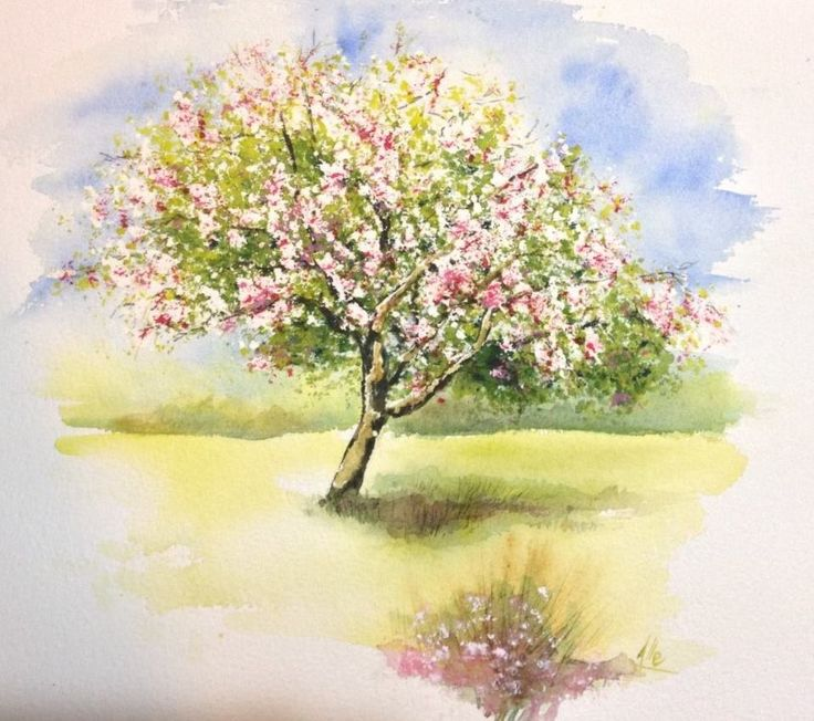 Melo in fiore