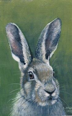 """Saatchi Online Artist Donna McGlynn; """"Hare"""""""