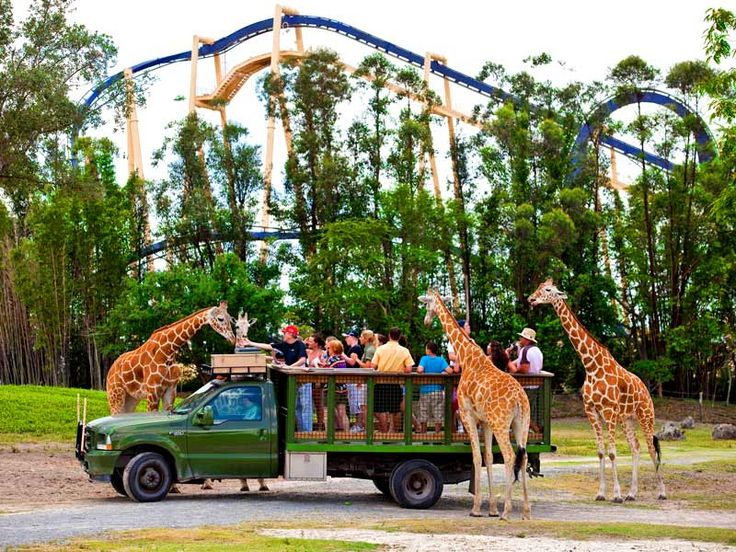 busch gardens tampa feeding the giraffes:) My kids can't wait to do this again.