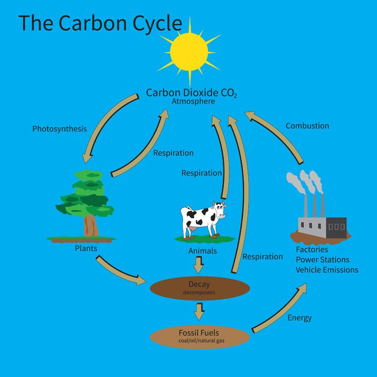 another look at the carbon cycle carbon dioxide pinterest carbon cycle the o 39 jays and. Black Bedroom Furniture Sets. Home Design Ideas
