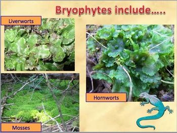 notes on the plant kingdom The plant kingdom description: green algae and plants both contain chlorophyll a, b, carotenes transcript and presenter's notes 7 there are four major groups of plants the nonvascular plants are most primitive (gametophyte.