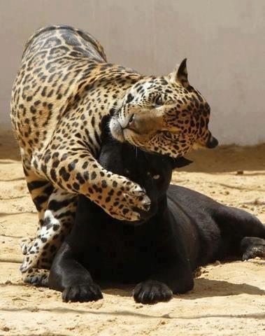 Fotógrafos registram animais raros em zoos pelo mundo; veja imagens