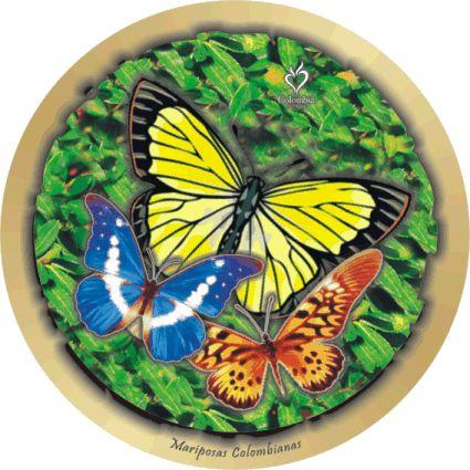 mariposas colombianas
